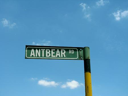 antbearrd.jpg