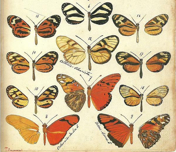 Mariposas dibujadas por Theophile Raymond, a principios del siglo XX