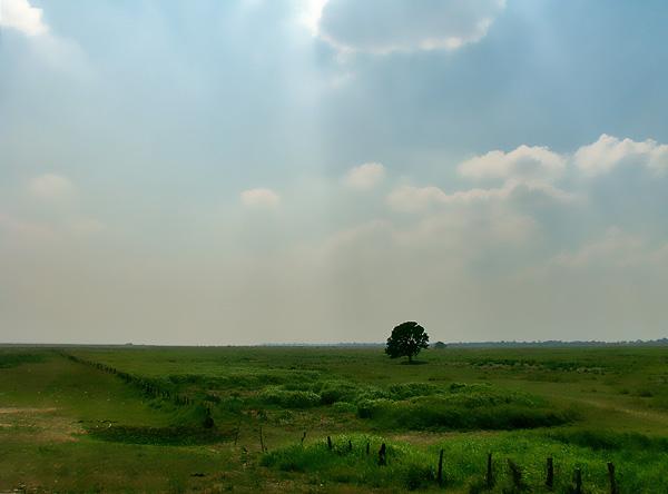Árbol solitario en Apure - 2008