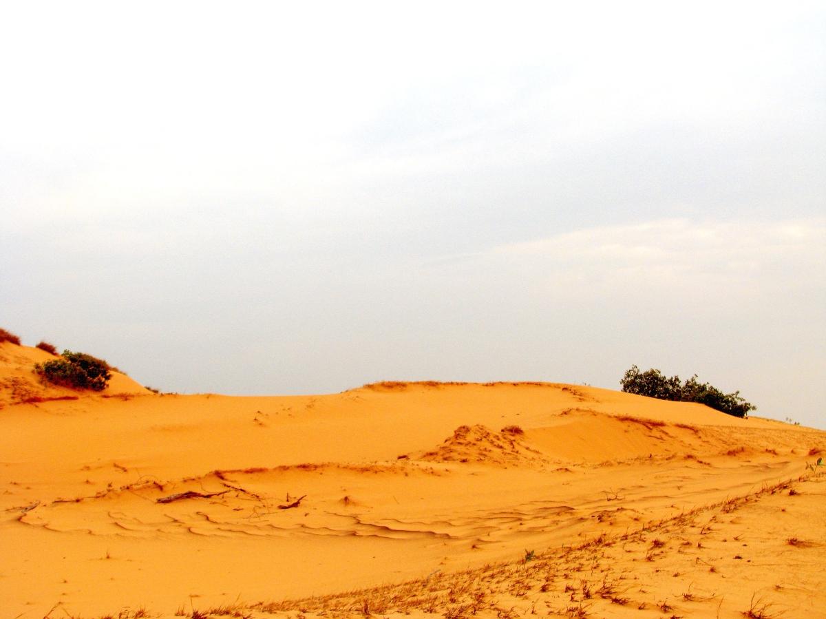 Desierto de voluntad